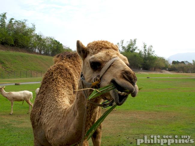 Baluarte Zoo Vigan City