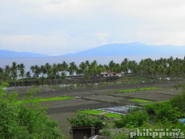 Rice Fields Maricaban Tingloy Batangas Philippines